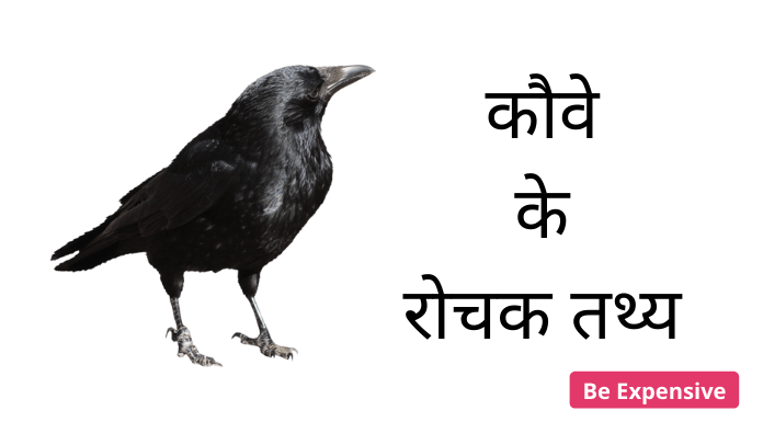 Crow in hindi fact