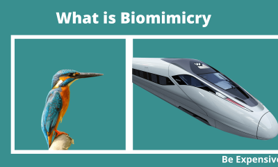 What is Biomimicry meaning in Hindi kya hai